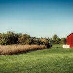 La importancia de la contabilidad en agricultura y ganadería